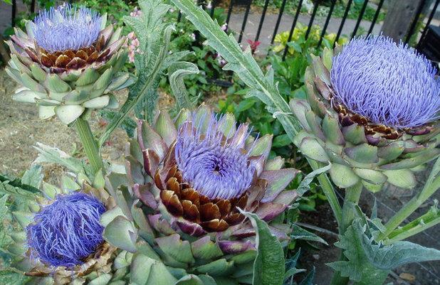 Front Yard Edible Garden Ideas 10 ideas for a front-yard edible garden your neighbors will love