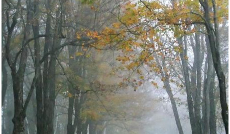 How to: Take Atmospheric Garden Photos in Mist and Fog