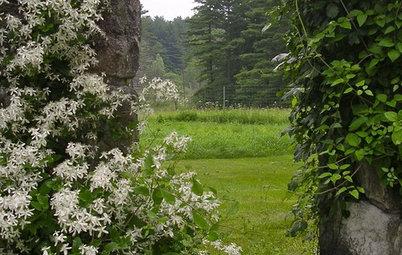 Old-School Design: Frame Your Garden View