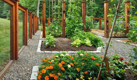 【3月のガーデニング】植物の動きが活発に。春の庭を楽しもう