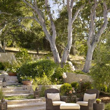 Enchanted Oaks