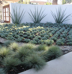 contemporary landscape by ecocentrix landscape architecture