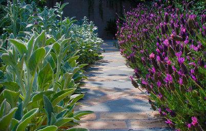 8 Piante Fiorite per un Giardino Sensoriale
