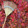 Your November Garden Checklist