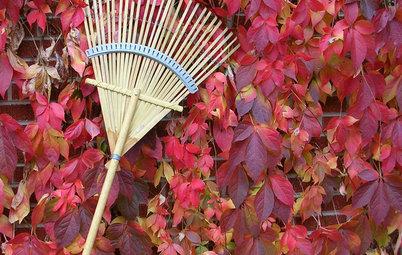 Que faire des feuilles mortes ?