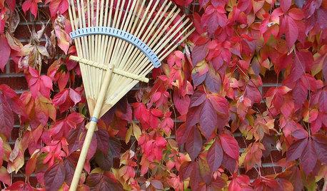 Your November Garden Checklist
