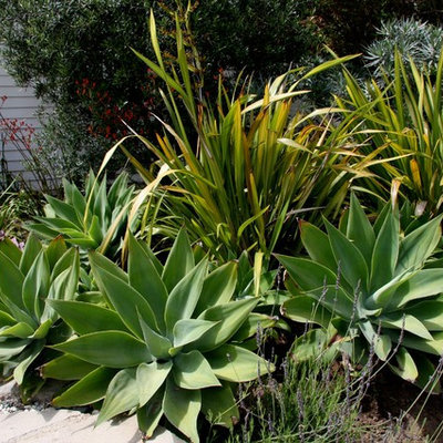 Inspiration for a mid-sized traditional full sun front yard concrete paver landscaping in Los Angeles.