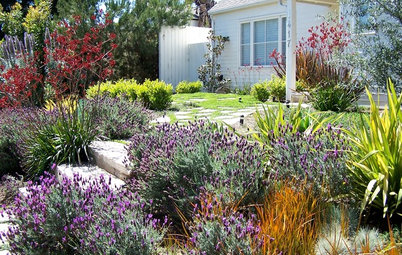 How to Find the Best Plants for Your Yard