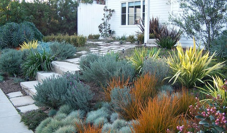 9 Ways to Use Bronze Foliage in Your Garden