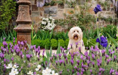Hundgerechter Garten: So fühlt sich Ihr Fiffi draußen pudelwohl