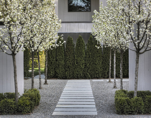Contemporary Garden by Terra Ferma Landscapes