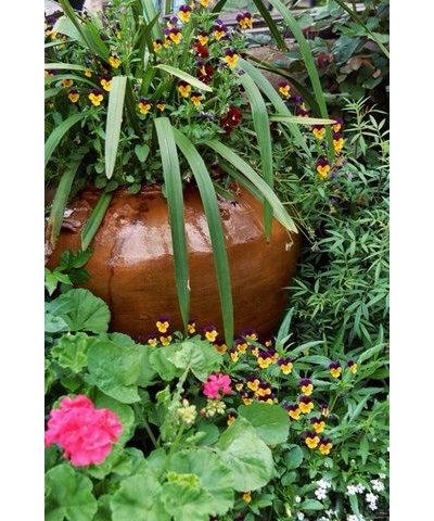 12 Idee Di Fioriture In Vaso Per La Bella Stagione
