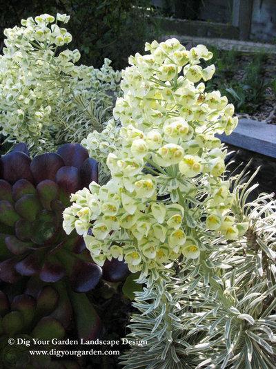 Mediterraneo Giardino by Dig Your Garden Landscape Design