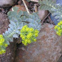 «Ленивый сад» на подоконнике: Что в нем выращивать и как