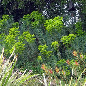 Euphorbia - Plants That Brighten Up The Late Winter Garden