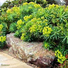 Mediterranean Landscape by Gardens by Gabriel
