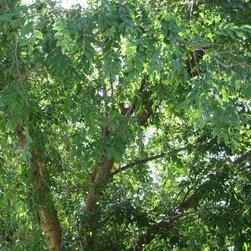 Sustainable Landscape Management -