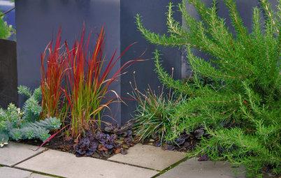 Great Design Plant: Japanese Blood Grass