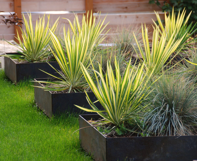 Amazingly low maintenance picks for outdoor planters for Low maintenance outside plants