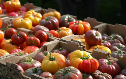 New Heirloom Tomato Hybrids Offer the Best of Both Worlds