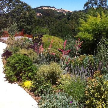 Fairfax Mediterrean garden