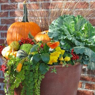 Idee per un piccolo giardino country davanti casa con un giardino in vaso