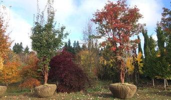Fall Harvest- Paperbark Maples