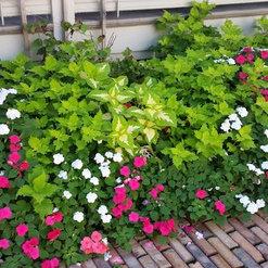 Creative Garden Services - Quincy, IL, US 62305