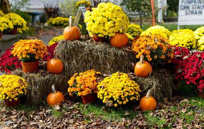 Crisantemo: Una flor de colores intensos típica del otoño