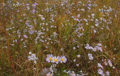 15 Native Flowers That Feed Native Bees