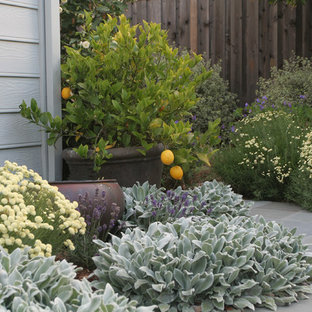 Inspiration for a traditional front yard landscaping in San Francisco.