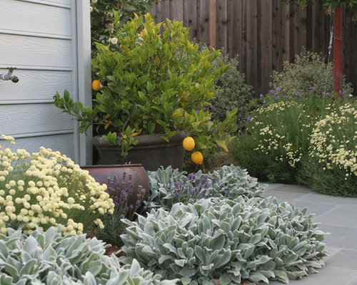 shade loving container plants  houzz, Natural flower