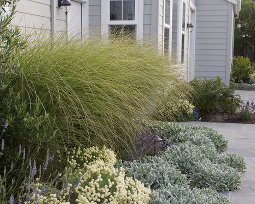 Pampas grass home design ideas pictures remodel and decor for Seagrass landscaping
