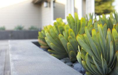Capire i Cactus. E Coltivarli