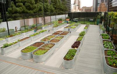 Recipe for Modernist Edible Garden Style