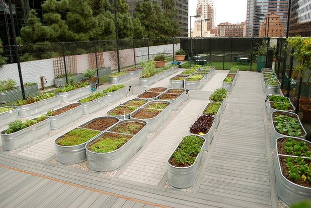 Contemporain Jardin by Farmscape
