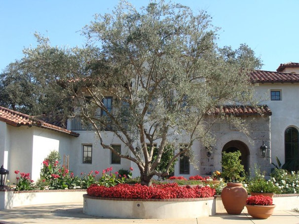 Mediterranean Landscape by Pacific West Tree Company