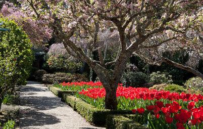 Easygoing Tulip Ideas From a Grand California Garden