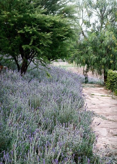 Mediterráneo Jardín by Hábitas