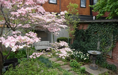 8 Trees Landscape Designers Love for Small Spaces