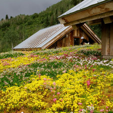 Rustic Landscape by Green Roofs of Colorado