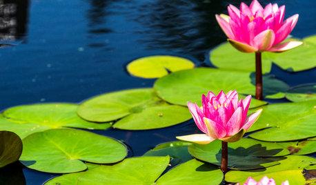 涼しげな水生植物とともに自然を感じる暮らし