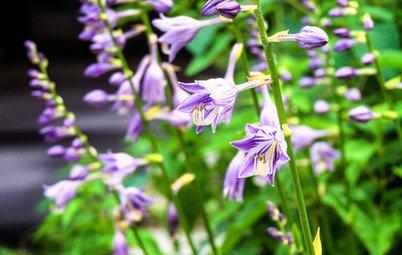 お手入れしやすく、海外でも注目。日本原産の植物でつくる庭