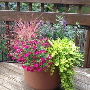 Idée de décoration pour un petit jardin arrière tradition avec une exposition ensoleillée.