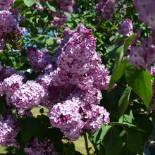 When Should You Prune Your Trees and Shrubs?