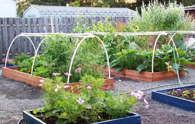 Attract Pollinators for a Productive Edible Garden