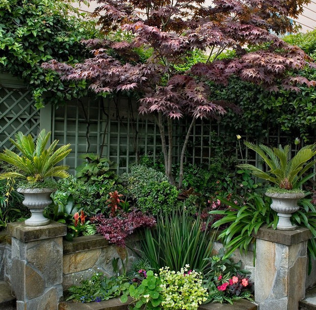 Grow your own privacy how to screen with plants and trees for North facing back garden designs