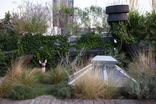 Contemporary Garden by BROOK LANDSCAPE