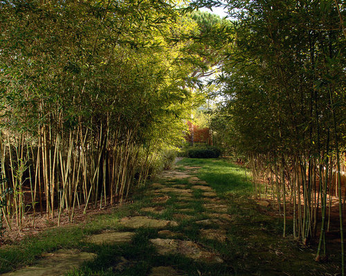 How To Grow Bamboo Fence Home Design Ideas Pictures