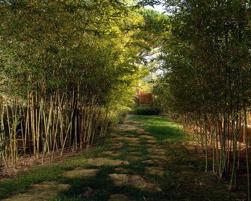 Bamboo Garden | Houzz